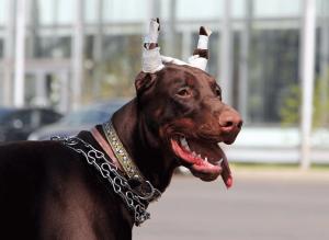 dog-ear-cropp-nuvet-reviews
