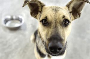 dog-stop-eating-nuvet-reviews