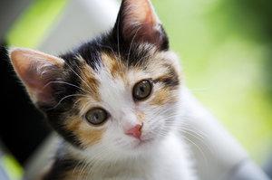 kitten innocence