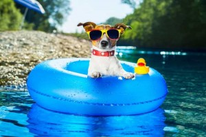 NuVet Labs: Tips for Keeping your Dog Safe in the Summer Heat