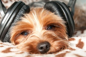 Nuvet Labs: Puppy listning music