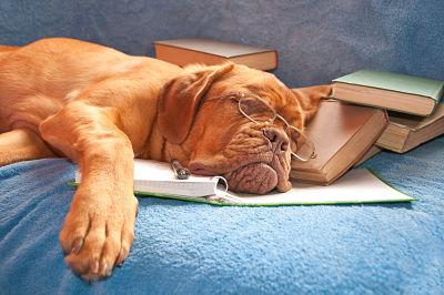 Nuvet labs: dog sleeping
