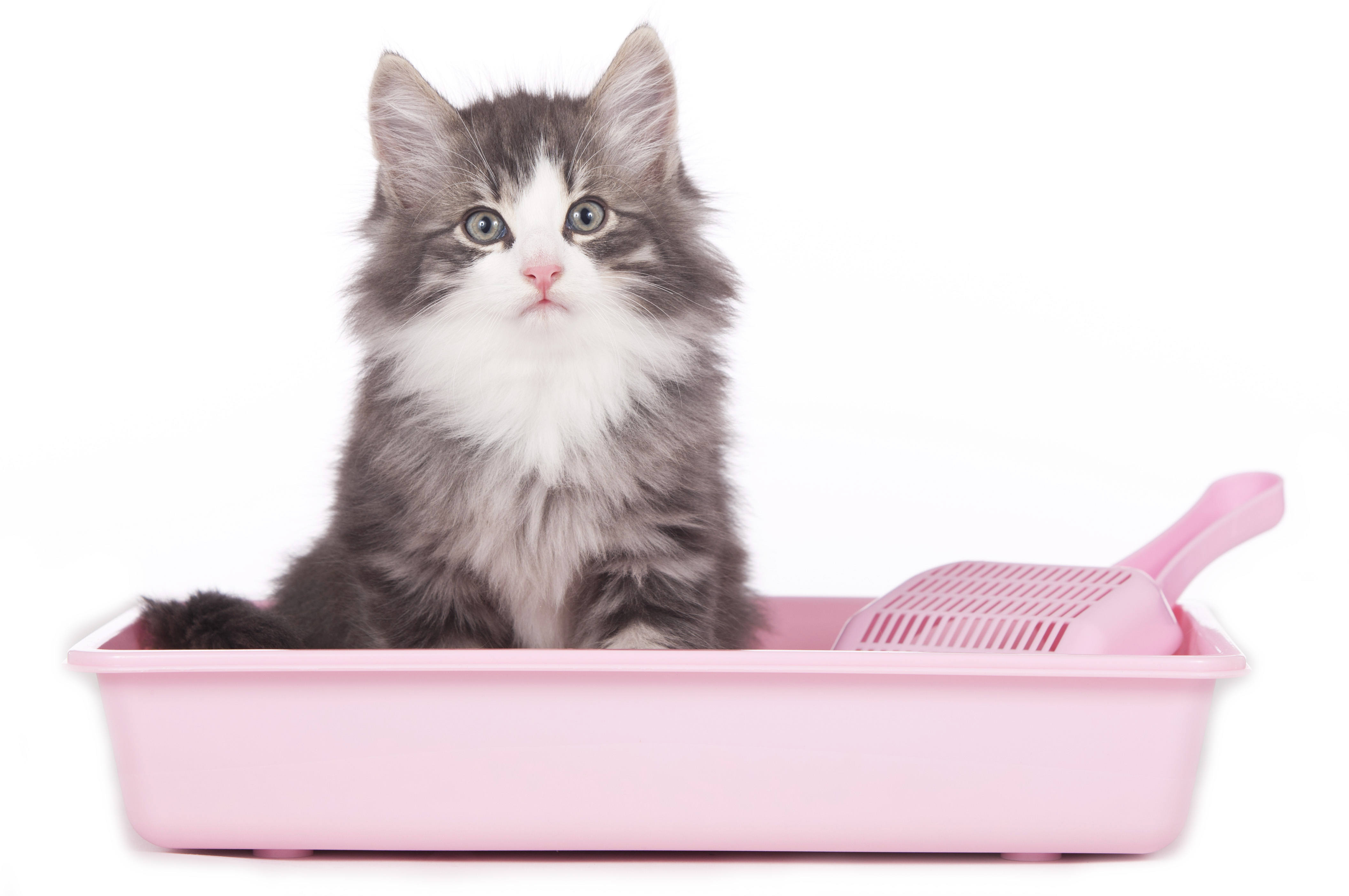 Nuvet labs the pros and cons of teaching your cat to use for Commode kitty