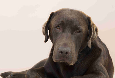 Nuvet Labs: Five Dogs Myths
