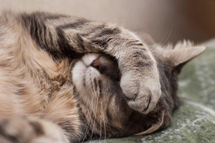 nuvet-reviews-plus-cat-litterbox
