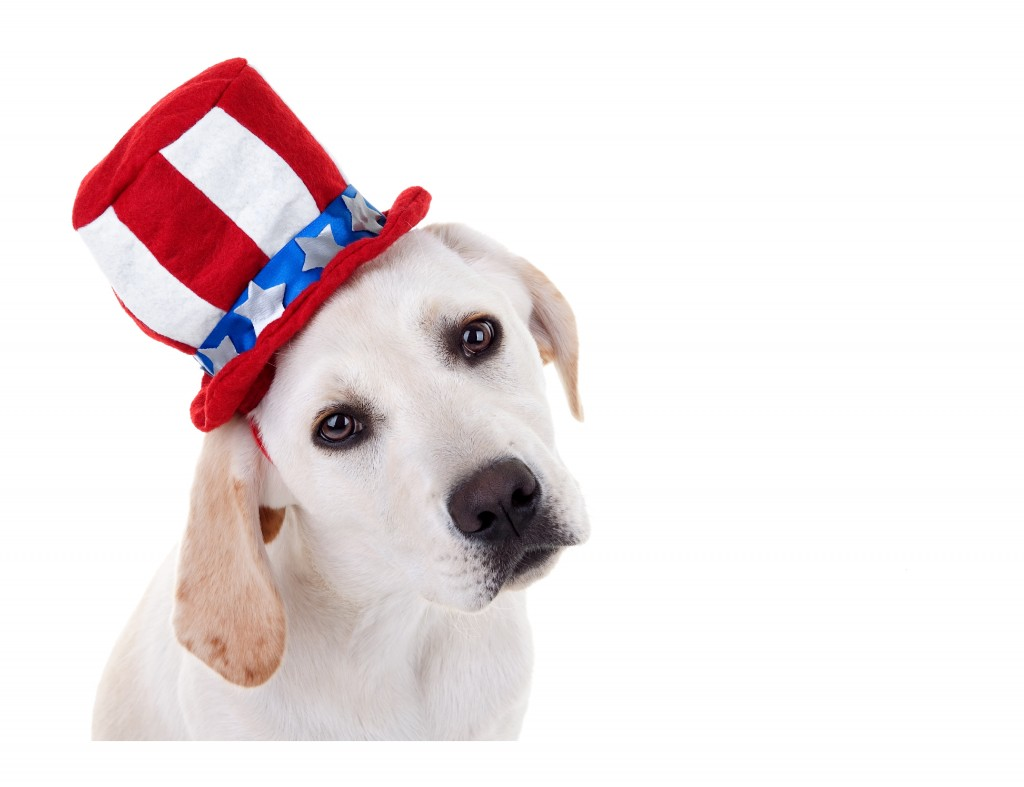Keep Fido Safe; 4th of July; dogs