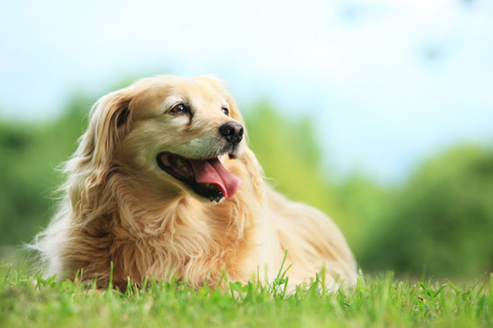 Leap-into-Spring-with-Your-Dog