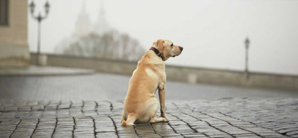 Dogs-that-Predict-Weather