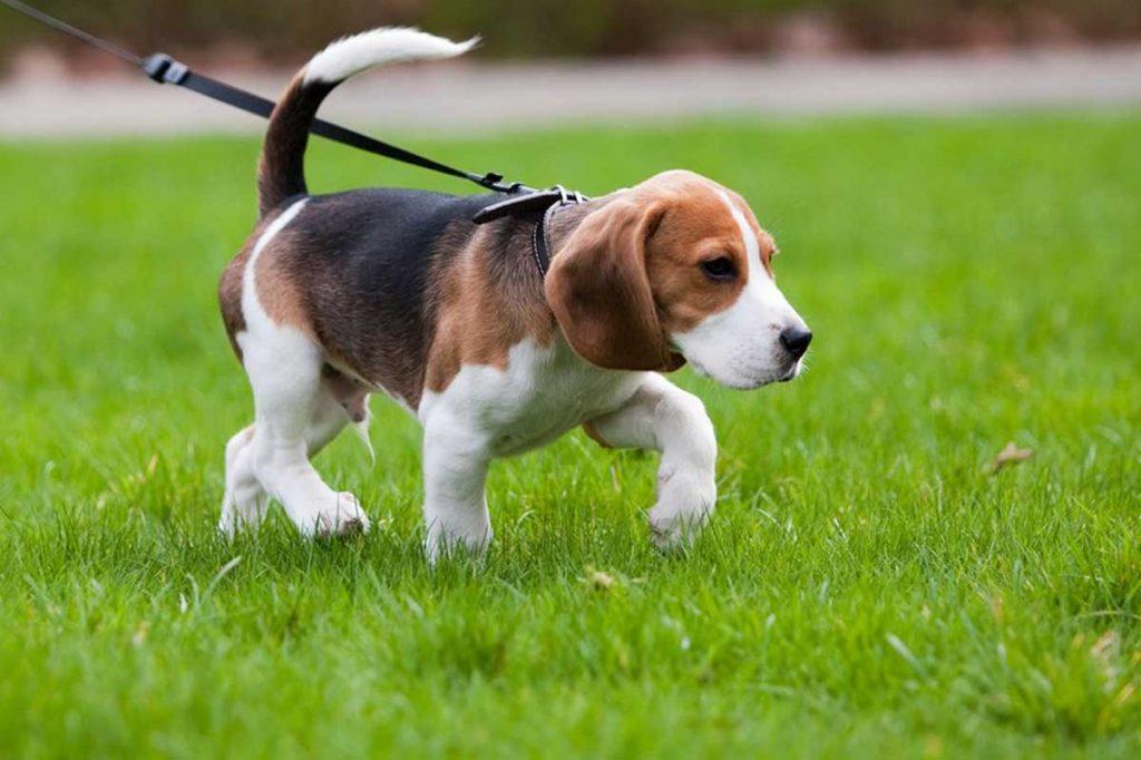 Dog-Safety-in-the-Garden
