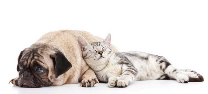 Dogs-and-Cats-Dream