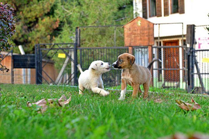 Pet-Safety-in-the-Garden