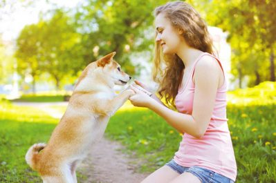 Dogs-Jump-to-Greet nuvet labs pet health tips and advices