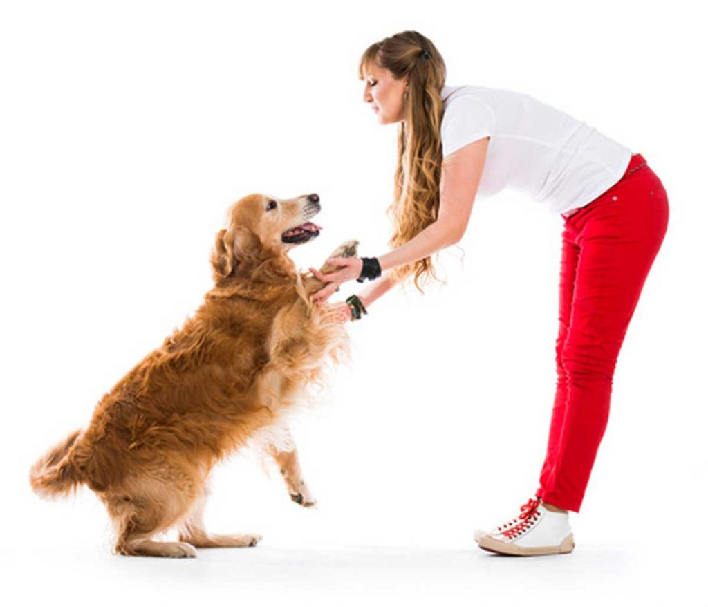 Why-Dogs-Jump-to-Greet