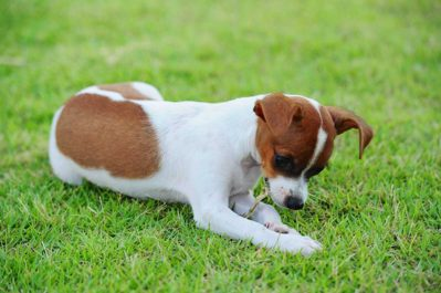 Dog-Taste-Buds nuvet labs pet health tips and advices2