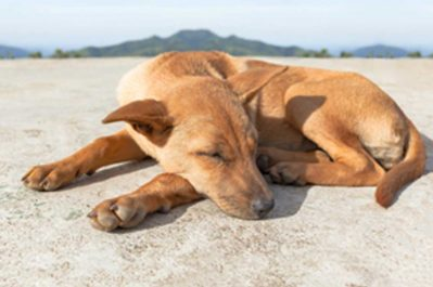 Dogs-Circle-to-Lie-Down nuvet labs pet health tips and advices