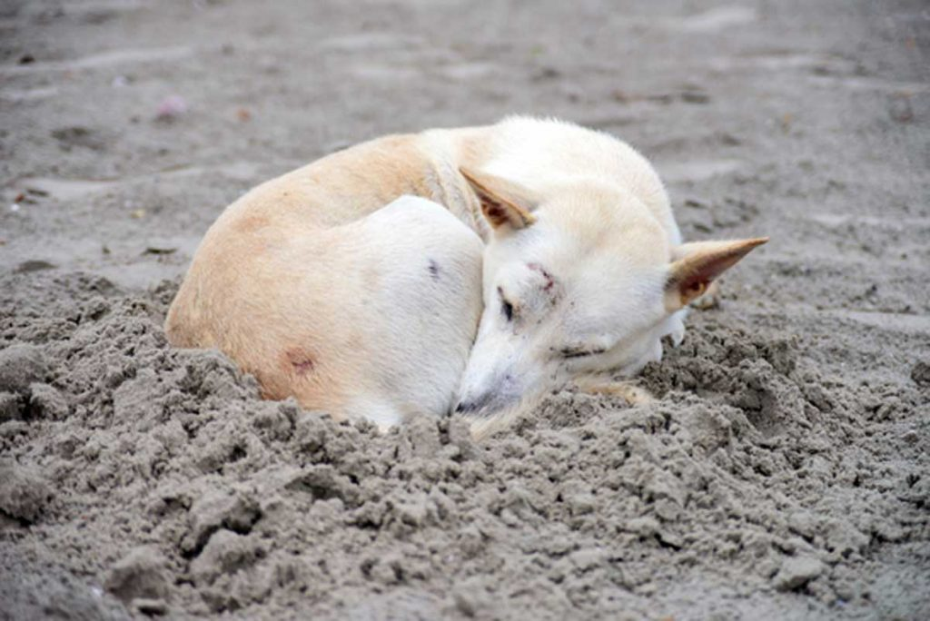 Why-Dogs-Circle-to-Lie-Down