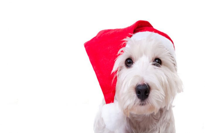 holiday-safety-tips-for-pets nuvet labs pet health tips and advices