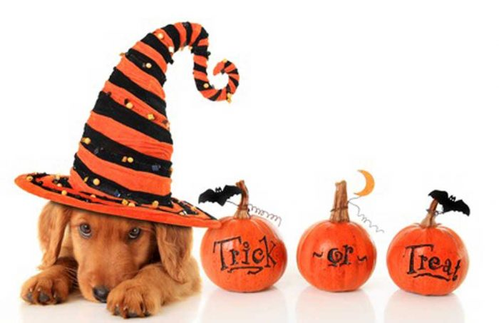 NuVet Reviews, Halloween safety tips