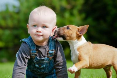 nuvet labs pet health tips and advices3