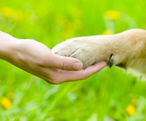 pet, pet paw, left or right, hand