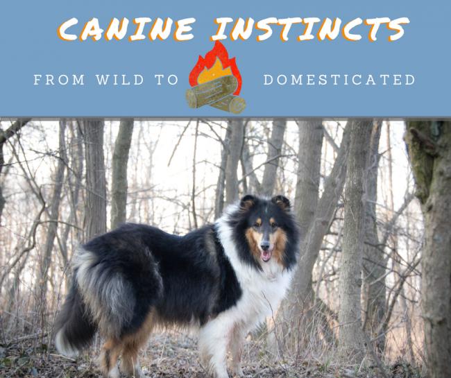Dog instincts