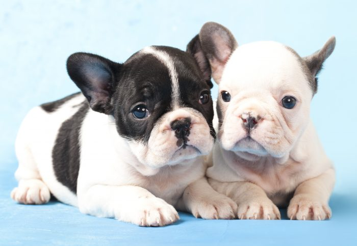 puppy socialization nuvet labs dog health tips and advices