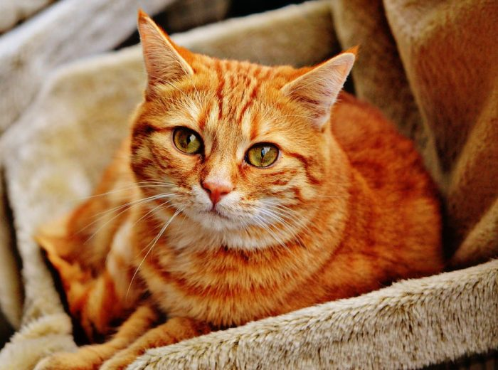cat nuvet labs cat health tips and advices