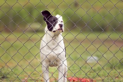 invisible fence nuvet labs dog health tips and advices