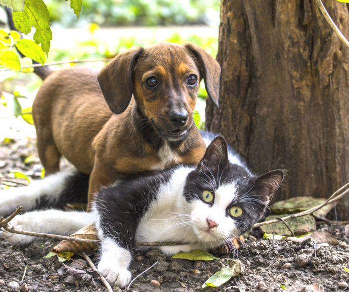 nutritional needs, dog, cat nuvet labs dog tips