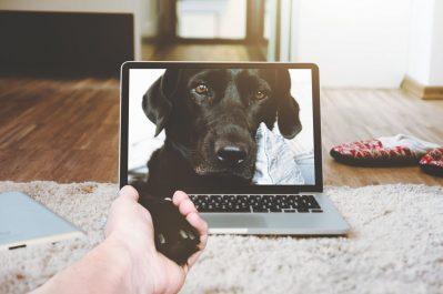 doggie daycare, dog, separation anxiety