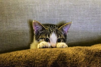 cat, kitten, anxiety, anxious nuvet labs cat tips