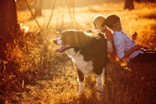 dog breed for kids nuvet labs dog tips
